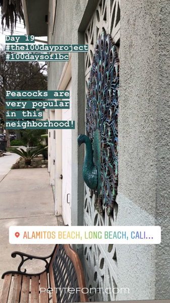 Image of colorful wrought iron peacock affixed to side of building above a wooden bench. Text in teal box reads Day 19 hashtag the 100 day project hashtag 100 days of lbc. Peacocks are very popular in this neighborhood! Text below reads Alamitos Beach, Long Beach, Cali... petite font dot com.