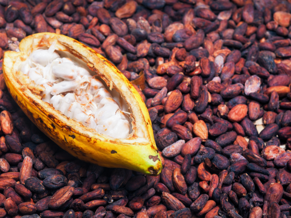 An open cacao pod sitting on roasted dark beans